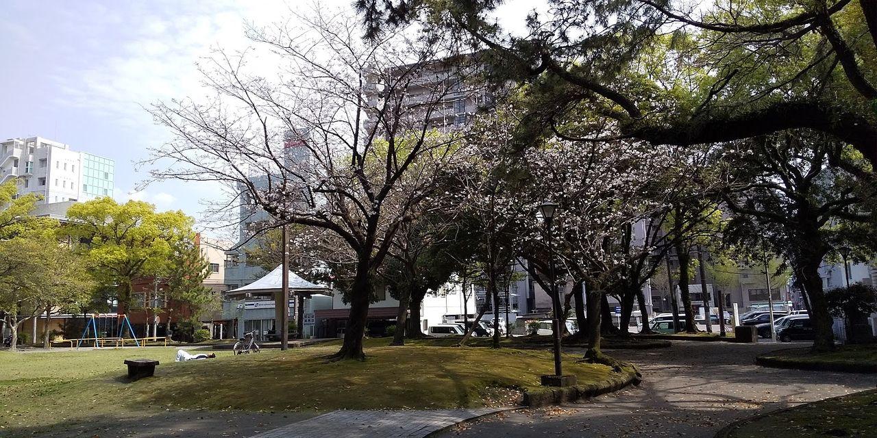 春になるとやわらかな桜にあふれます