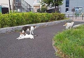 鹿児島市 ベストホーム ペット飼育について