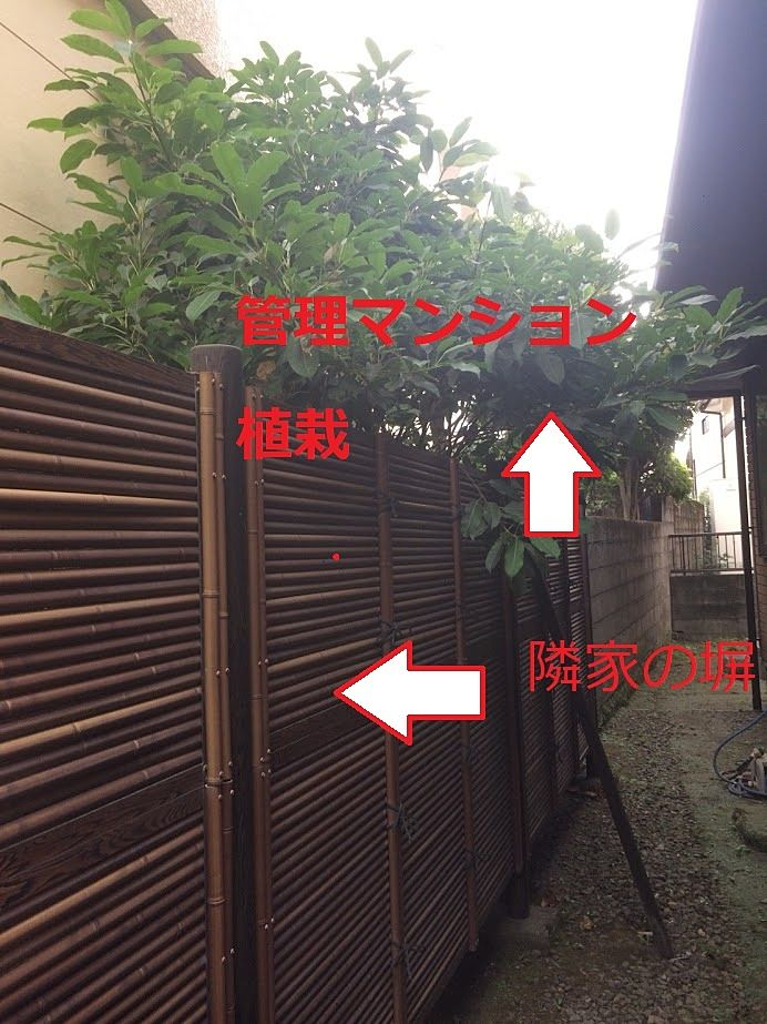 管理マンションの敷地から木の枝が伸びまくって隣家にお邪魔していました。